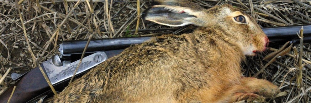Photo: Hare and riffle